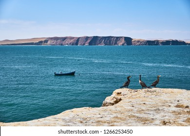 Three sea birds on the cliffs with the sea and boats in the background, in the natural reserve Paracas, Peru