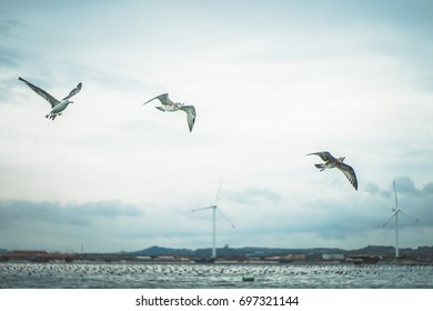 Three seagulls flying over the ocean