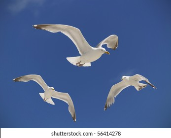 Three seagulls hover over a beach in the summer sky