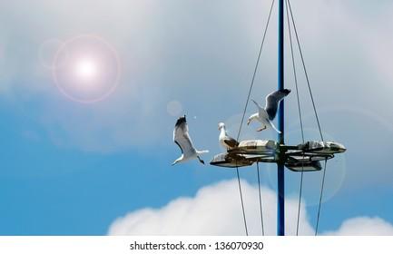 three seagulls on a floodlight pole