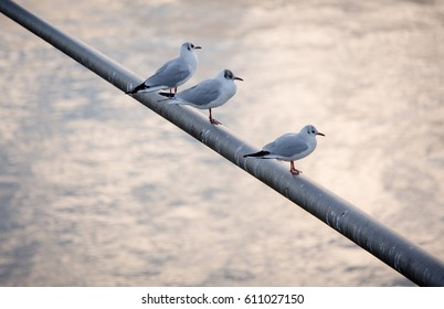 Three seagulls sitting on metal rod over bright water