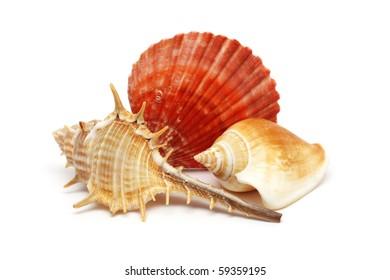 Three seashells put together isolated over white background.