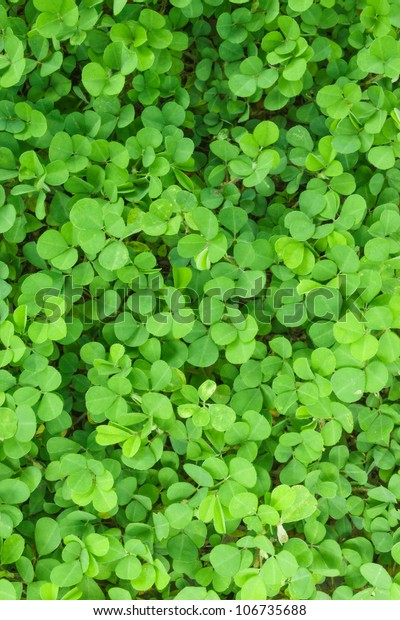 Three Shamrock Leaves Clover Patch Stock Photo Edit Now 106735688