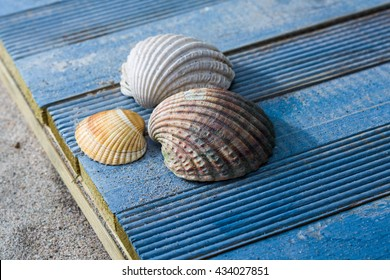 Three shells on the beach, blue wooden background