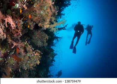 Three silhouettes of Scuba Divers swimming next to live coral reef full of fish, soft and hard coral in National Park of Egypt.