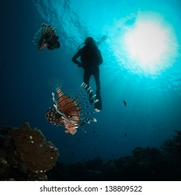 Three silhouettes of Scuba Divers swimming next to the live coral reef full of fish. / Scuba Diving