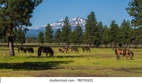 Three Sisters mountains and horses grazing near Sisters, Oregon.