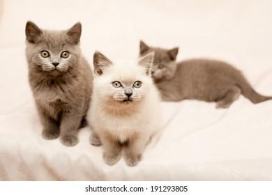 Three sitting kittens on pink background