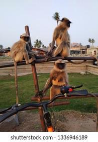 Three sitting  Monkeys  - Hampi India