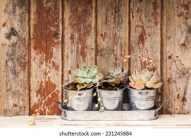Three small pot plants on a old wooden shelf.