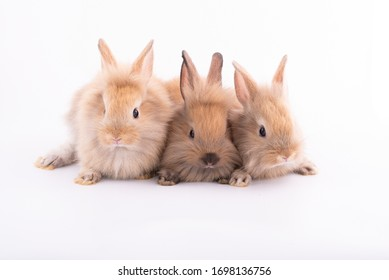 Three small rabbits isolated on a white background