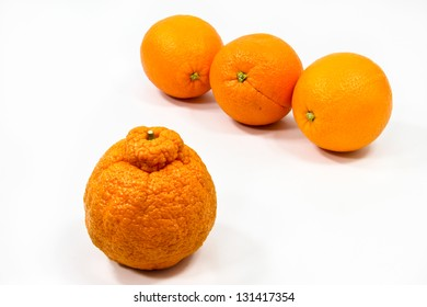 Three smooth oranges keep their distance from an odd, lumpy-skinned type of orange.