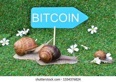 Three snails rushing to Bitcoin