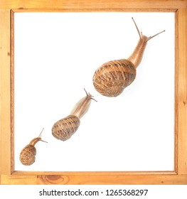 Three snails from small to big illustrate sluggish growth.