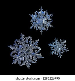 Three snowflakes isolated on black background. Macro photo of real snow crystals: elegant stellar dendrites with ornate shapes, hexagonal symmetry, glossy relief surface and complex inner patterns.