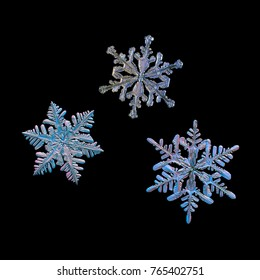 Three snowflakes isolated on black background. Macro photo of real snow crystals: small stellar dendrites with glossy relief surface, hexagonal symmetry and elegant arms with many side branches.