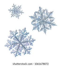 Three snowflakes isolated on white background. Macro photo of real snow crystals: big stellar dendrites with complex, ornate shapes, fine hexagonal symmetry, long elegant arms and glossy surface.