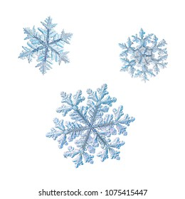 Three snowflakes isolated on white background. Macro photo of real snow crystals: big stellar dendrites with complex, ornate shapes, fine hexagonal symmetry, long elegant arms and many side branches.