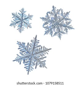 Three snowflakes isolated on white background. Macro photo of real snow crystals: large stellar dendrites with complex, ornate shapes, fine hexagonal symmetry, long elegant arms and glossy surface.
