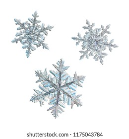 Three snowflakes isolated on white background. Macro photo of real snow crystals: large stellar dendrites with elegant, ornate shapes, relief surface, fine hexagonal symmetry and complex structure.