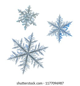 Three snowflakes isolated on white background. Macro photo of real snow crystals: elegant stellar dendrites with complex, ornate shapes, glossy relief surface, hexagonal symmetry and thin, long arms.