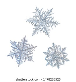 Three snowflakes isolated on white background. Macro photo of real snow crystals: elegant stellar dendrites with ornate shapes, fine hexagonal symmetry, thin fragile arms and complex inner structure.