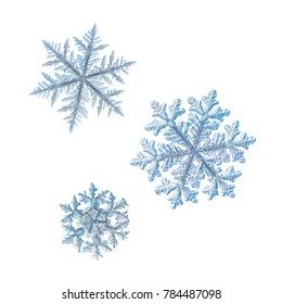 Three snowflakes isolated on white background. Macro photo of real snow crystals: large stellar dendrites with complex ornate shapes, fine hexagonal symmetry, elegant arms and glossy relief surface.