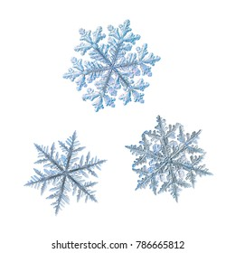 Three snowflakes isolated on white background. Macro photo of real snow crystals: big stellar dendrites with perfect hexagonal symmetry, complex elegant shapes, glossy relief surface and ornate arms.