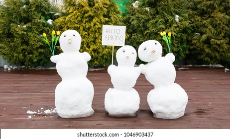 "Three snowmen. The concept of ""hello spring."" Spring came. In the hands of a snowman there are tulips and a sign with an inscription. Snow is melting. March. Broken snowman."