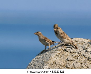Three sparrows perched on a rock, against blue sea