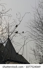 three sparrows in the twilight