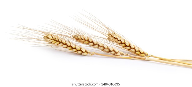 Three spikelets of wheat on a white background