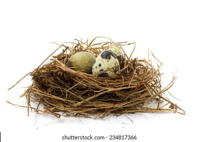 Three spotted quail eggs in a nest