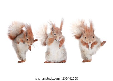 three squirrel with podnyaty paws on a white background