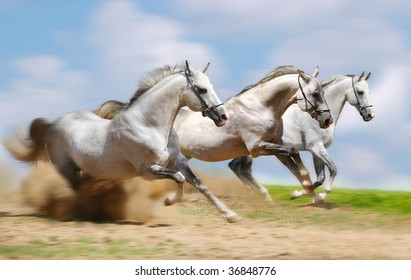 three stallion running fast