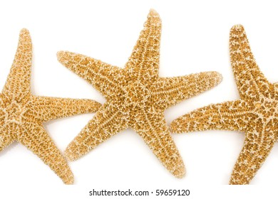 Three starfish isolated on a white background