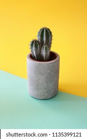Three stemmed Tree Cactus in a cement stone pot on a turquoise and yellow geometrical background