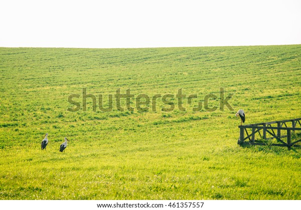 three storks on the green field. big bird sitting on the wooden fence