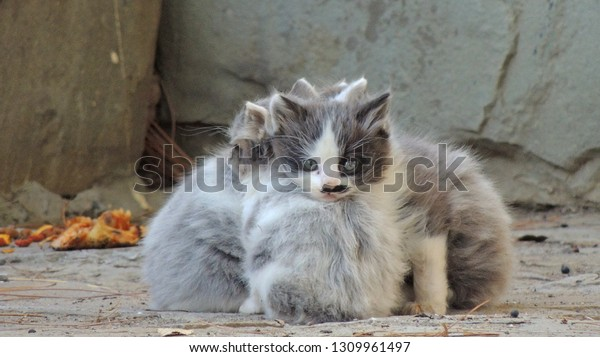 three-stray-little-kittens-cold-600w-130