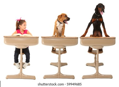 Three students in school desk over white.  Seven year old american girl, boxer puppy and doberman puppy.