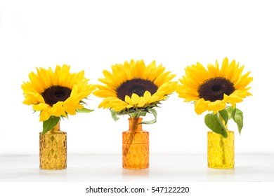 Three sunflowers in glass vases