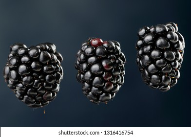 Three suspended blackberries an aggregate fruit named Rubus fruticosus on a blue background