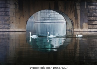 three swans under the bridge, Prague