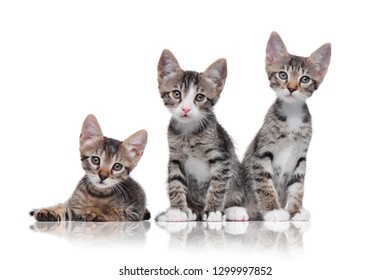 Three tabby kittens isolated on white background