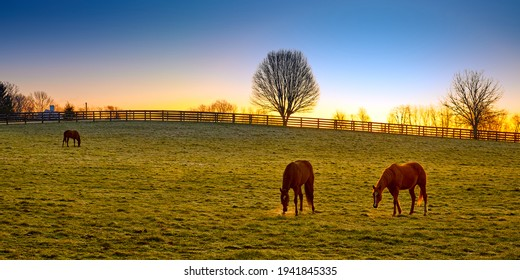 Three thoroughbred horses grazing at sunrise in a field.