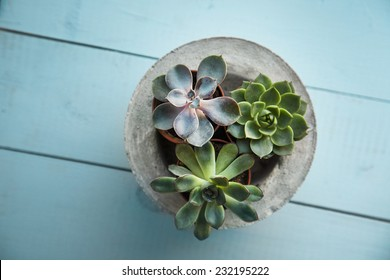 Three tiny succulents in concrete pot over old wooden background. Scandinavian style interior decoration