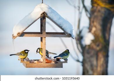 Three tit in the snowy winter bird feeder eating pork fat