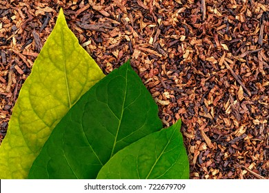 Three Tobacco green  leaf on Tobacco dry background. High quality green tobacco leaf and dry cut tobacco  big leaf, macro close up.