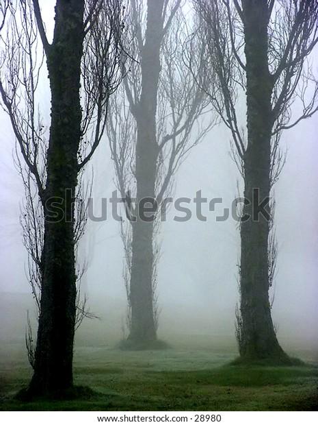 Three tree receding into fog.