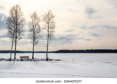 Three trees and a bech, beautiful afternoon late winter frozen lake landscape.